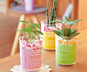 デザートカップ/ミニ観葉植物