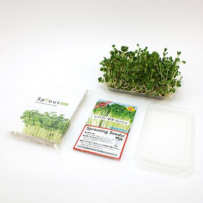 BOOKでスプラウト栽培セット