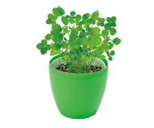 きっとみつかる四つ葉のクローバー栽培セットプチ